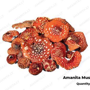 Dried Amanita Muscaria Hats