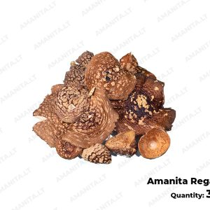 Dried Amanita Regals Hats