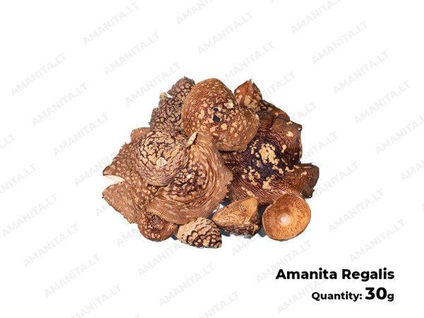 Dried Amanita Regals Hats
